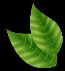 Praxom Leaf